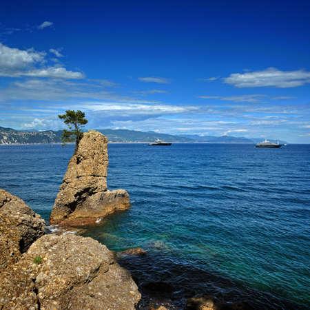 lonelyness: Lonely pine on the rock at mediterranean sea on Italian riviera, near Portofino Stock Photo