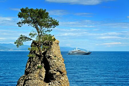 lonelyness: Lonely pine on the rock at mediterranean sea