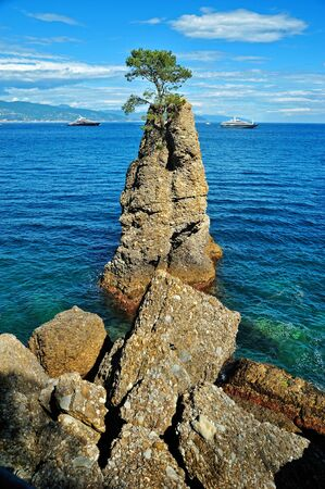 lonelyness: Lonely cedar on the rock at mediterranean sea Stock Photo