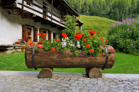 Alpien garden flowerbed with red pelargonium flowers