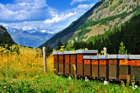 Alpien apiary with beautiful mountain view in Rhemes Notre Dame Stock Photo