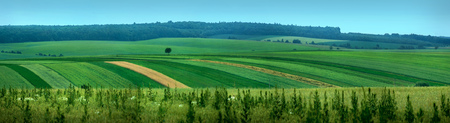 panoramic appearance of paws of fields 스톡 콘텐츠