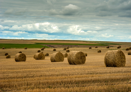 view of hay bales on autumn field after harvest Stock fotó