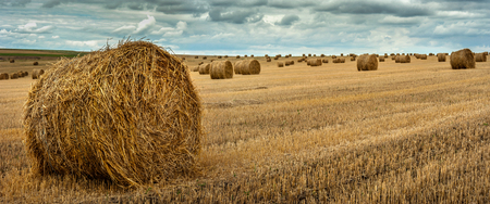 Panoramic view of hay bales on the field after harvest