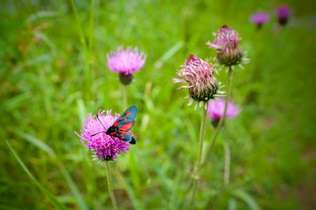 the butterfly is the adornment of alpien mountain Stock Photo
