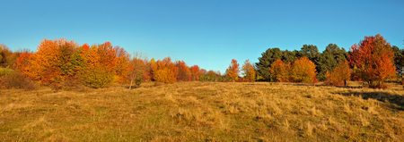 Panoramic view of autumn sunset trees and grass 免版税图像
