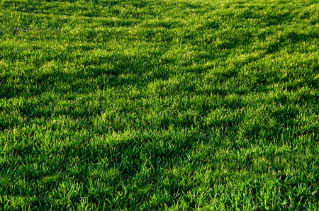 Striped pattern of light and shadows on a beautiful fresh green grass vibrant color
