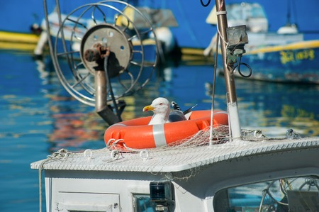 The seagull sits in a rescue circle on a ship in the port Stock Photo