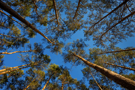 Trees in a forest look up at the blue sky