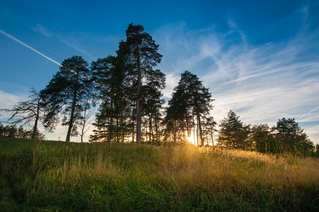 Shadow of pine trees and sunset light in the evening. Stock Photo