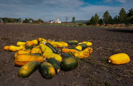 Autumn field landscape with pumpkins and old church