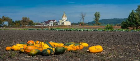 Autumn field landscape panorama with pumpkins and old church 版權商用圖片
