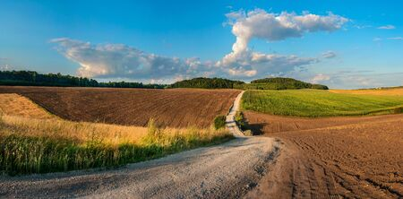 Farmer rural dirt road in wheat fields and harvest. An empty ground. Summer Sunny day, clouds