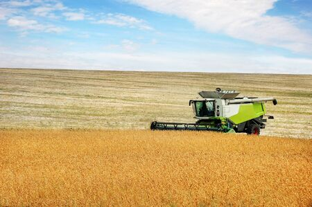 the harvester harvests soybeans, soybeans in the autumn