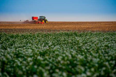 Baikivtsi, Ternopil region, Ukraine - July 06, 2019:Fermers cultivate with the simultaneous introduction of fertilizers near the flowering of buckwheat field in Ukraine 新闻类图片