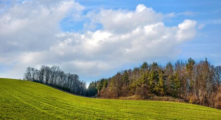 fields of winter wheat in hilly terrain near pine forest in spring with cloudy sky