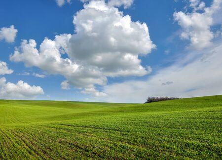 cloudy sky, green fields of winter wheat in hilly terrain in spring