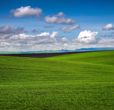 lines of fields with winter wheat in hilly terrain in spring with cloudy sky