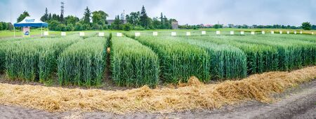 panoramic view of divided sectors demo plots of cereals with tables, new varieties in agriculture