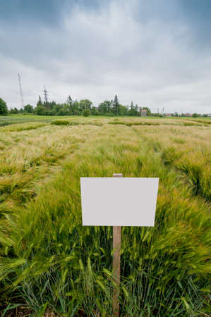 new varieties of winter barley sectors demo plots with pointers,