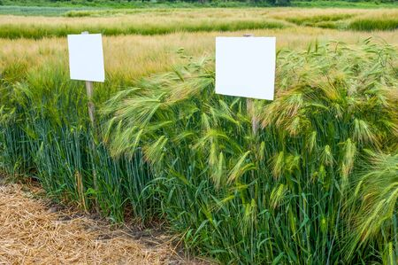 divided sectors demo plots of cereals with pointers, new varieties of winter barley