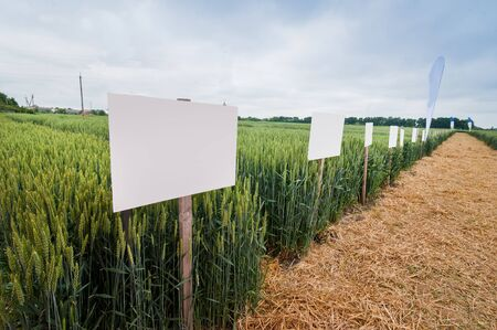 New varieties of grain crops with pointers, selection and research programs