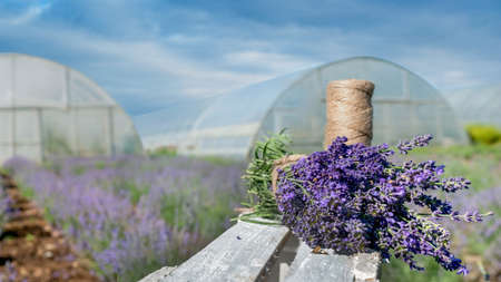 knitting bouquets of lavender in the garden, a spool of thread, decoration, decor, Provence Stockfoto
