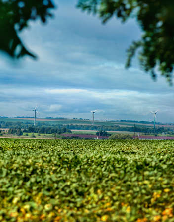 soy field with Wind turbines generating electricity at horizont Banco de Imagens