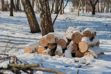 Winter landscape with firewood. Forest sawmill, birch logs covered with snow.