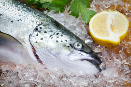 animal head: close-up view of fresh salmon on ice with lemon and greens Stock Photo