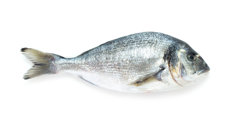 closeup view: close-up view of gilt-head bream isolated on white background
