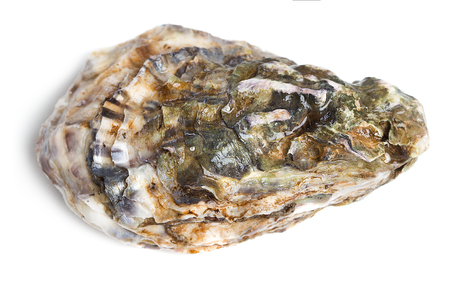 single raw oyster isolated on white background