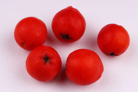 Several rowan berries on a white background