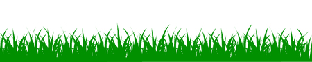 Green grass, nature background - for stock illustration.