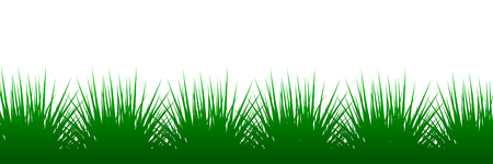 Green grass on white background - vector illustration