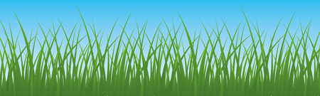 Field, green grass with sky background vector.