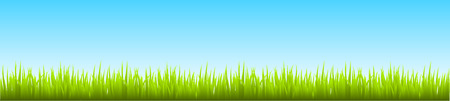 Field, green grass with blue sky - stock vector