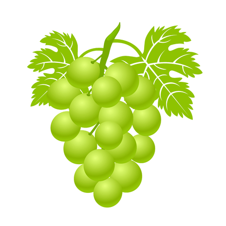 Green bunch of grapes with leaves. Sweet berry simple flat icon – stock vector Illustration