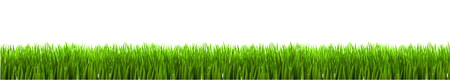 Field, green grass on white background