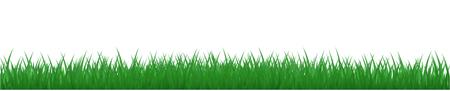 Green grass, nature background - vector