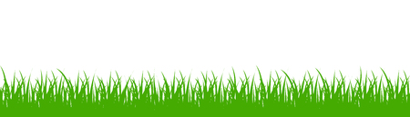Green grass on white background - vector