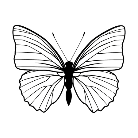 Butterfly stencil by hand drawing – stock vector Иллюстрация