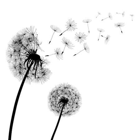 Abstract black Dandelions, dandelion with flying seeds - stock vector