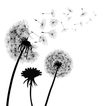 Abstract black Dandelions, dandelion with flying seeds - vector Illusztráció