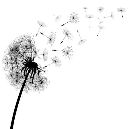 Abstract black dandelion, dandelion with flying seeds - stock vector