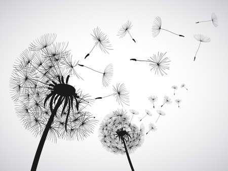 Abstract black dandelion, dandelion with flying seeds - for stock vector