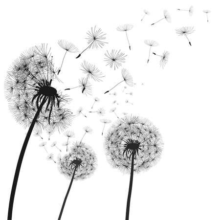 Abstract black dandelion, dandelion with flying seeds illustration - vector Vector Illustration