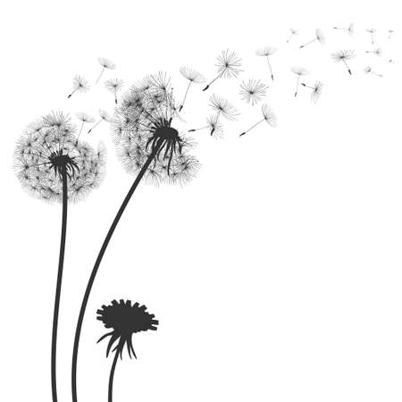 Abstract black dandelion, flying seeds of dandelion - for stock Çizim