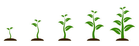 Evolution concept. Phases plant growing. Seeds sprout in ground. Planting tree infographic. Sprout, plant, tree growing agriculture icons. Planting tree process, business concept flat design - vector