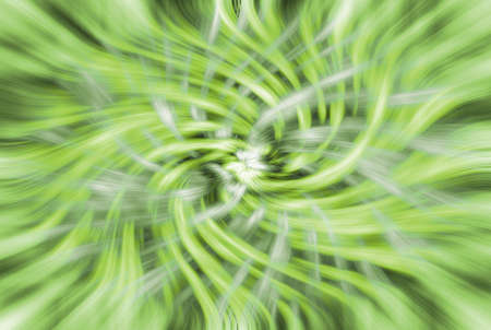 abstract green flower background from various whirls photo